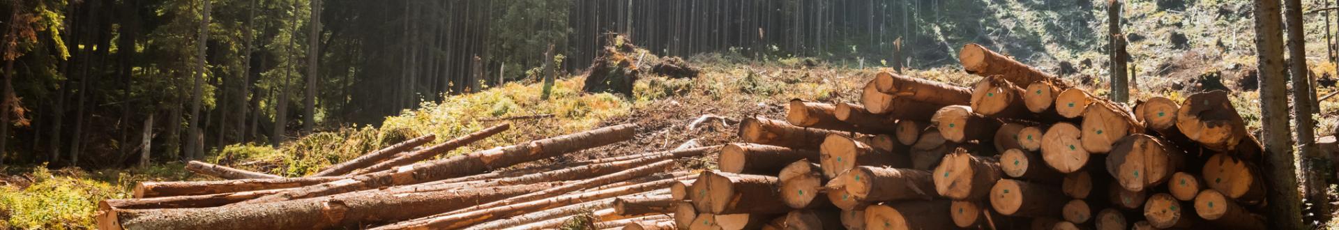 Drewno na opał Cyców